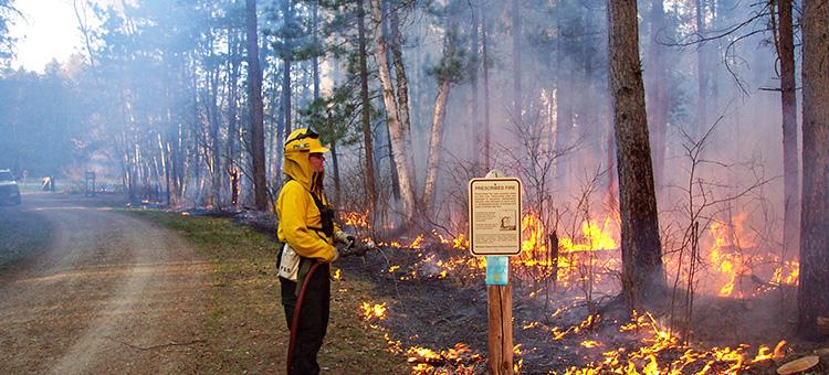prescribed burn in a Minnesota state park