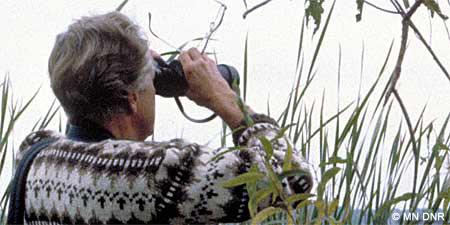 Looking for birds