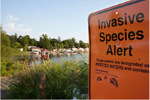 Invasives species sign