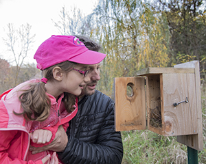 people checking bluebird house