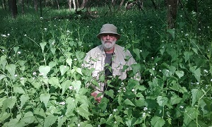 man in a field of garlic mustard