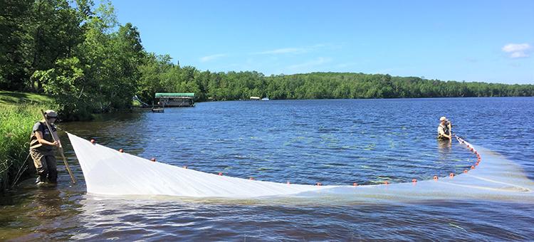 Fisheries staff using a 50 foot seine to capture fish in nearshore habitat