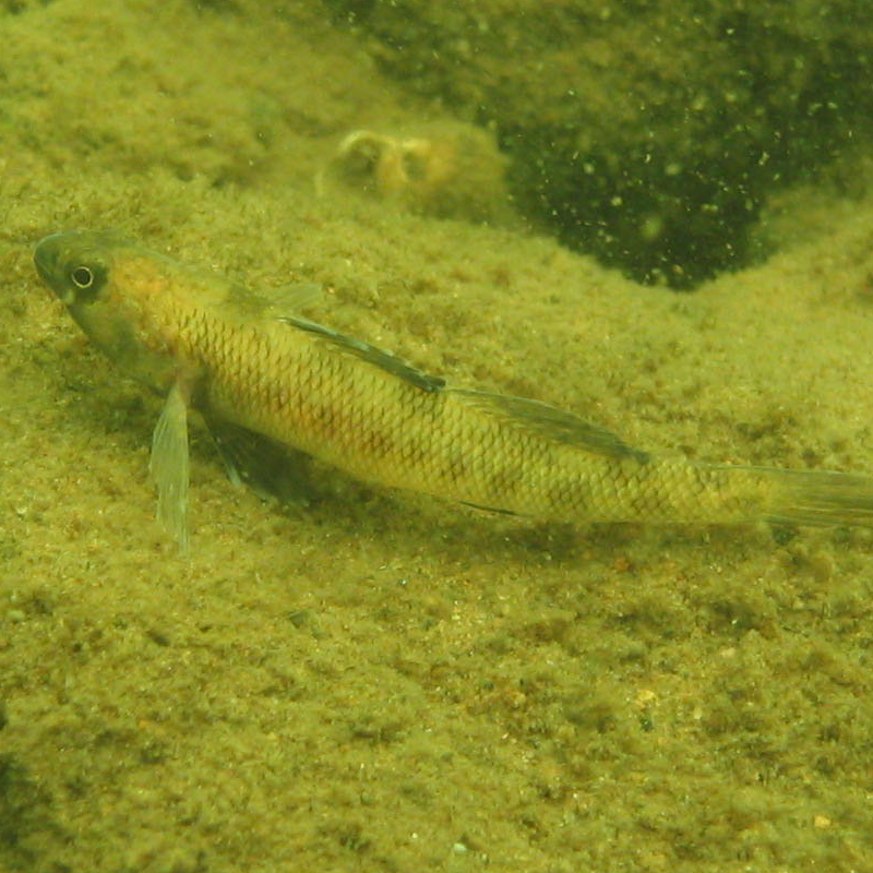thumbnail of a small benthic-dwelling species