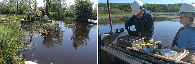 Perch Lake restoration