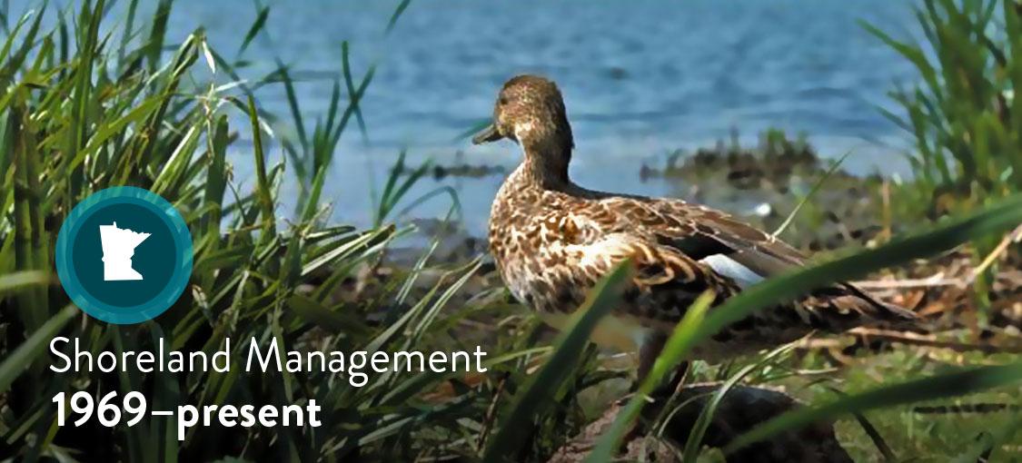 Photo of duck nesting on shoreland