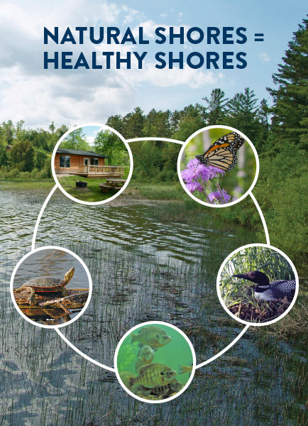 natural shores equal healthy shores - cabin, butterfly, loon, fish and turtle