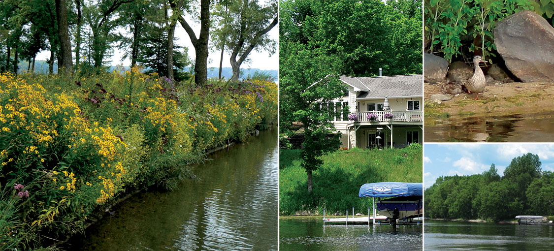 four images showing ideal shoreland practices - wildflowers near a shoreline, a cabin near water, wildlife on a beach and lush trees near water