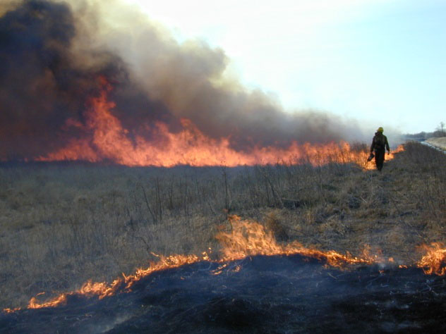 Karlstad area wildlife staff conduct a presscribed burn to help maintain the health of unique tallgrass aspen parkland habitat.