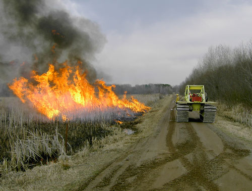 Burning a swamp edge along one of the roads in the Mille Lacs Wildlife Management Area.