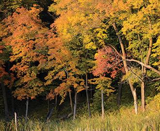 Forest habitat.