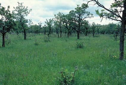 Shrubland habitat.