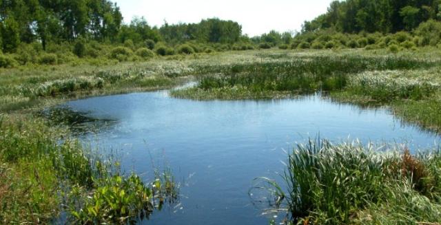 Wetland habitat.